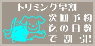 松戸市 かんじ動物病院トリミングルームのトリミング早割